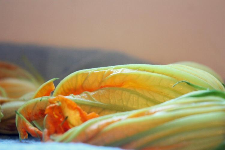 squash-blossoms-2